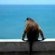 /ca-es/seascape-resort-baan-krood/hotel/prachuap-khiri-khan-th.html?asq=jGXBHFvRg5Z51Emf%2fbXG4w%3d%3d